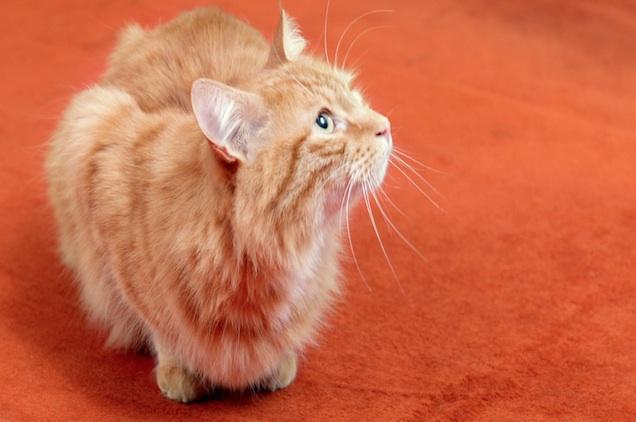 La croisière Tigersushi Furs