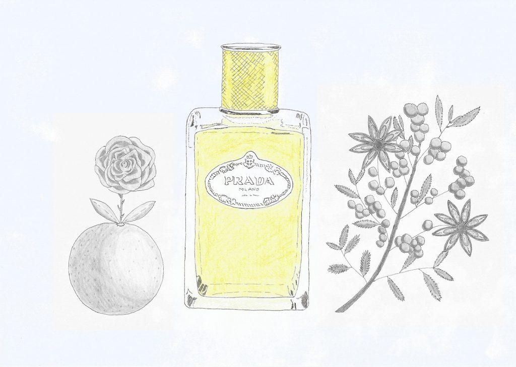 Le Mimosa de Prada