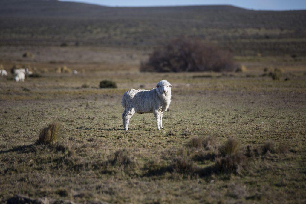 La route de la laine